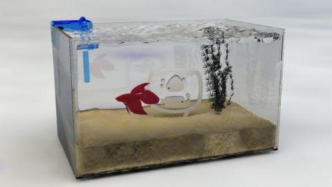 Como Montar um Aquário para Peixe Beta