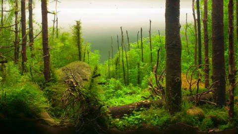 Aquapaisagismo: Conheça os estilos de abordar a paisagem no aquário