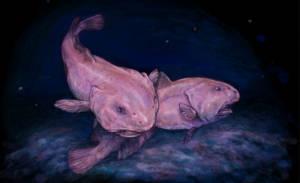 ilustração de dois peixes-bolha (blobfish)
