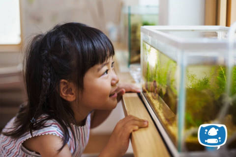 Um guia para você que é iniciante no aquarismo se sair muito bem