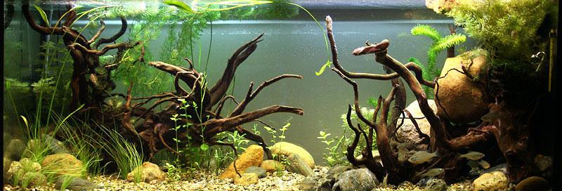 aquário com estilo biótopo de aquapaisagismo