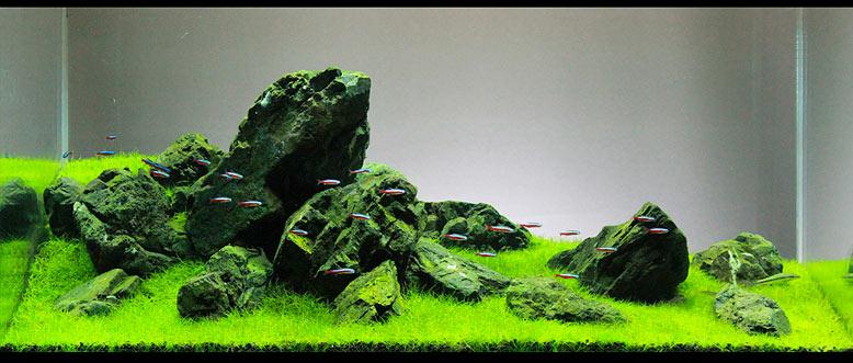 aquário com estilo Iwagumi de aquapaisagismo
