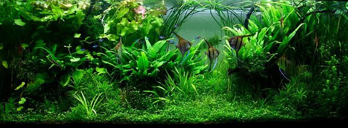 aquário com estilo jungle (selva) de aquapaisagismo