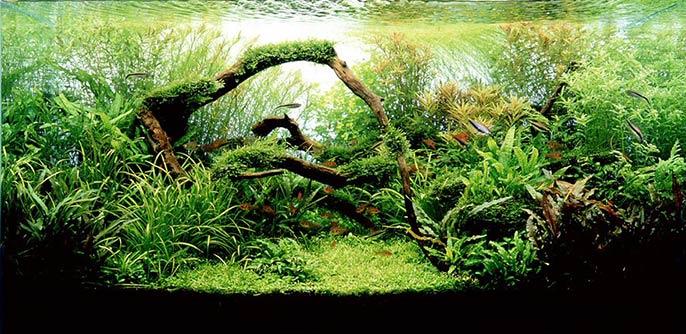 aquário com estilo nature aquarium de aquapaisagismo