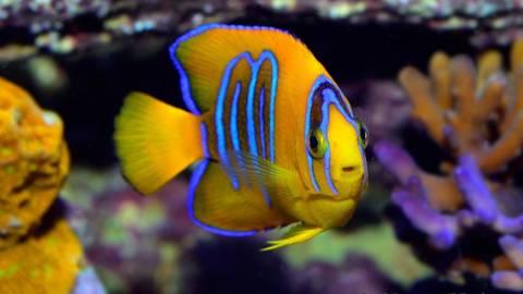 Os 10 Peixes mais Caros do Mundo
