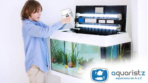 Conheça os peixes ideais para quem é iniciante no aquarismo