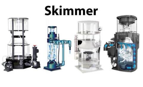 Skimmer: O guia completo para iniciantes no aquarismo