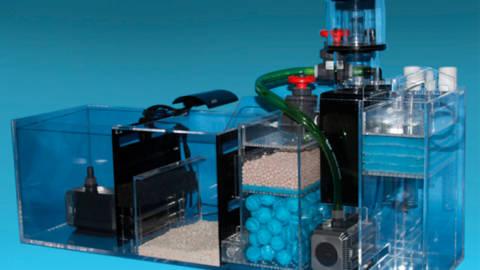 Filtro de Aquário: O Guia para o Iniciante no Aquarismo
