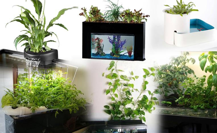 filtro de plantas de aquário