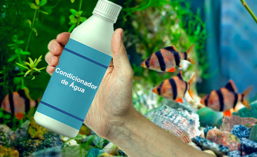 garrafa de condicionador de água segurada em frente à um aquário de água doce