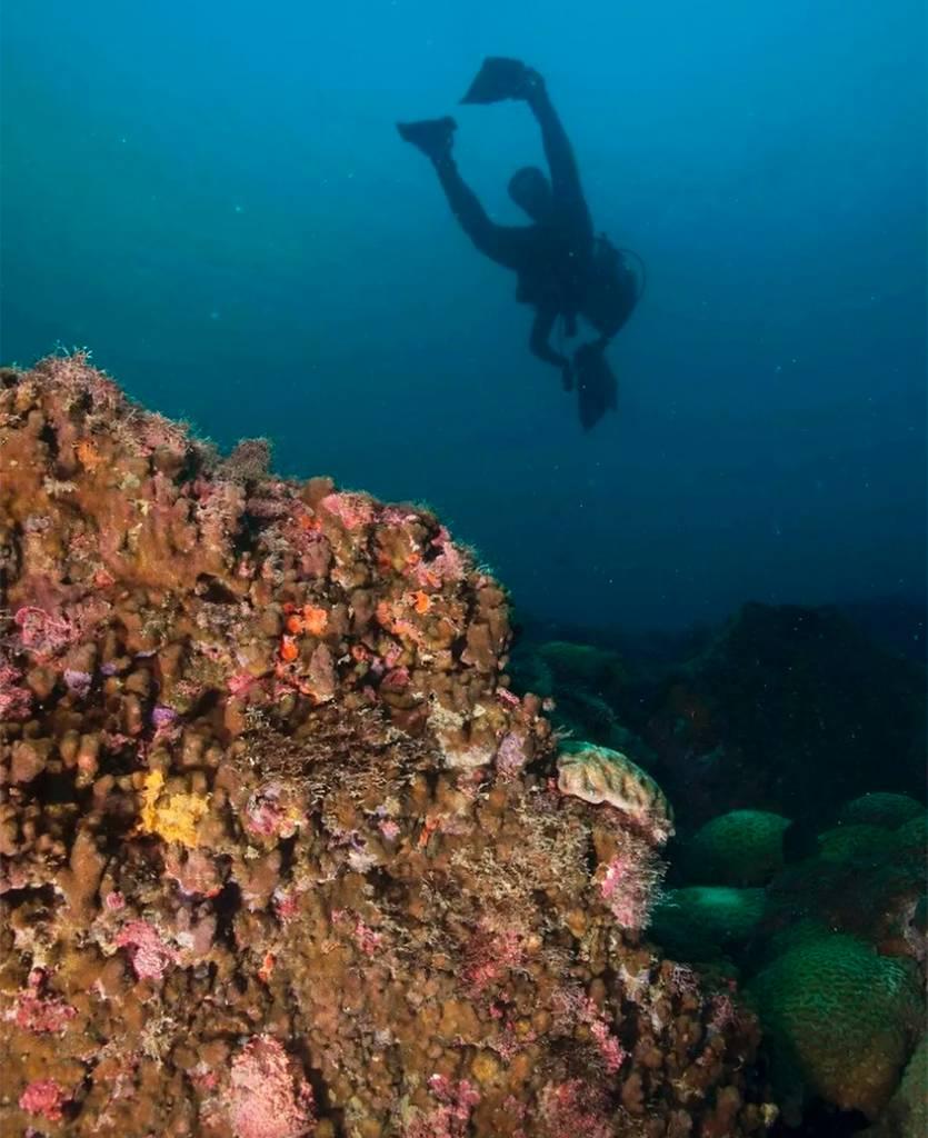 mergulhador nadando em cima do recife de corais