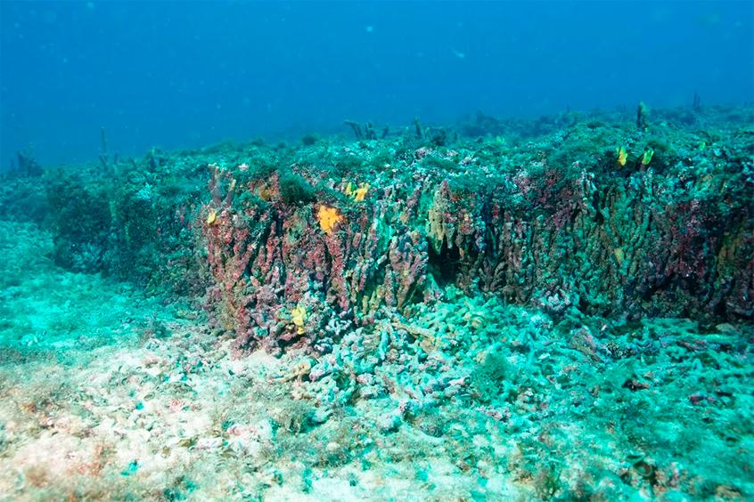 recife de corais vista de frente