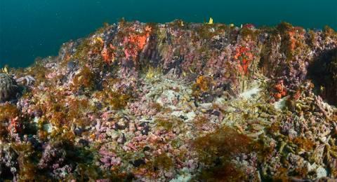 Corais de 5 Mil Anos Descobertos