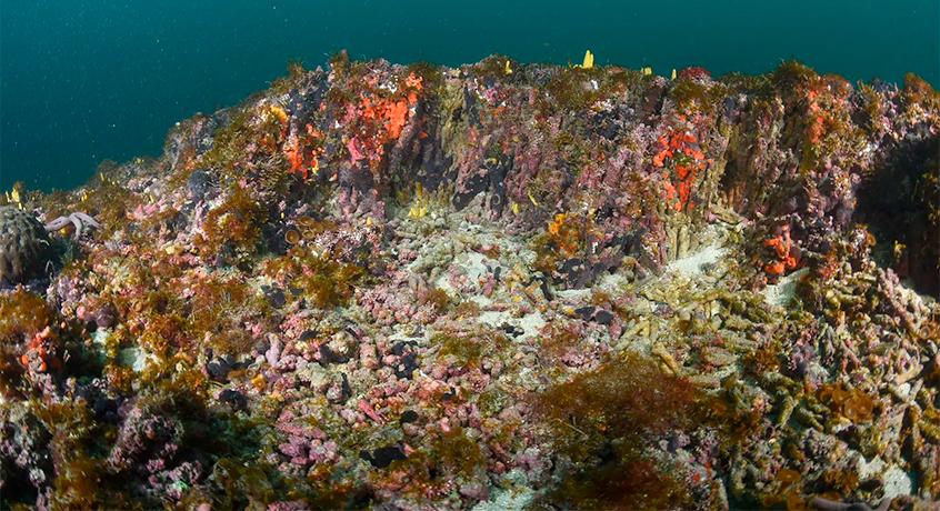 recife de corais em queimada grande