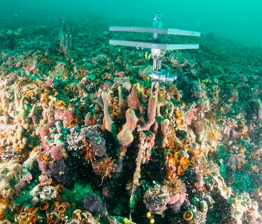 equipamento de monitoramento em cima dos corais